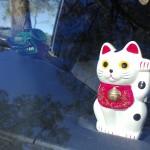 Dashboard Cat